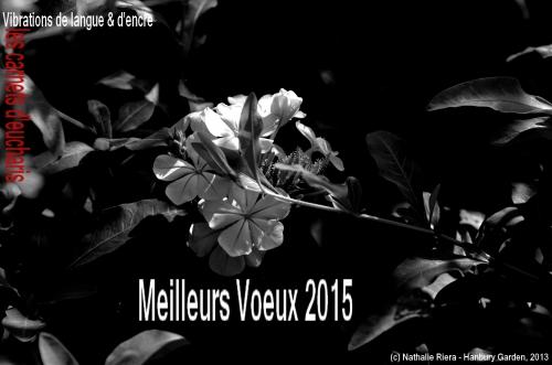 MEILLEURS VOEUX 2015.jpg