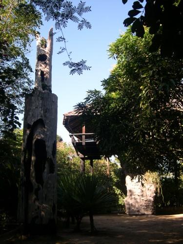 A Nova Viçosa, découverte de la maison de Frans Krajcberg sur l'arbre (2).jpg